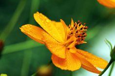 Flor em Macrofotografia