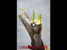 How to take care of your home garden and multiply your plants Music: That-Kind-of-Crazy - Bing video Earn Money From Home, Useful Life Hacks, Take Care Of Yourself, Incense, Gardening Tips, Home And Garden, Crazy Youtube, Plants, Bing Video