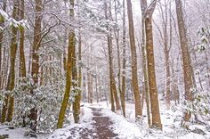 The Big Creek trail in the Smoky Mountains covered in snow