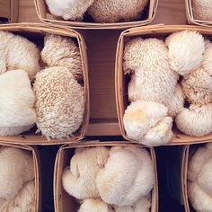 Lion's Mane Mushrooms by SnoValley Mushrooms at the Ballard Farmers Market || Photo by rootedinthevalley