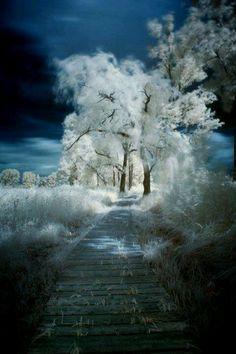 whispering winter..............