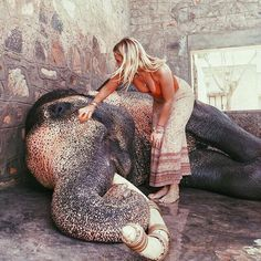 Elephants need pats sometimes cause they get sad, just like humans need pats sometimes for motivation