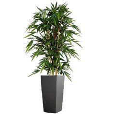 Schöner Bambus Kunstbaum 150cm, Maxifleur Kunstbäume