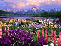 A beautiful concept... Snow on mountain top along side a field of flowers...if this isn't digitally edited...