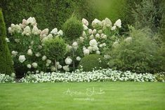 Garden advice is not that hard to come by. In fact, you can get gardening advice from another gardener, in a gardening catalogue, gardening books Forest Garden, Lawn And Garden, Garden Trees, Boxwood Garden, Hydrangea Garden, Hydrangeas, Hydrangea Landscaping, Garden Landscaping, Backyard Retaining Walls