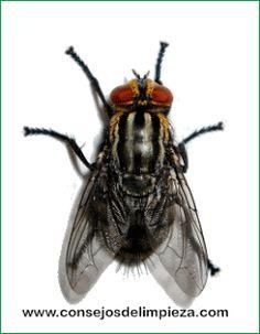 9 Ideas De Control De Mosquitos Control De Mosquitos Trampas Para Moscas Remedios Caseros