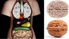 Удивительная связь с внешним видом пищи и его целебными для человека свойствами! Вы когда-нибудь замечали, что плод грецкого ореха напоминает мозг, а зерно фасоли напоминает почку? Это сходство показ