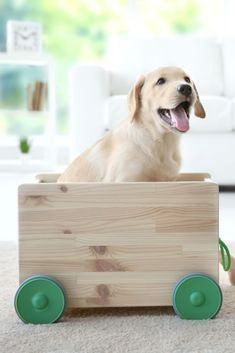 Cute Child And Labrador Retriever Playing With Wooden Toy Cart At