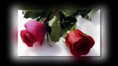 Jutros mi je ruža procvjetala - AMIRA MEDUNJANIN