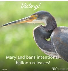 #Maryland proud - we are the 6th state to Protect wildlife by banning balloon releases