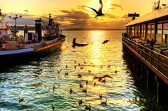 seattle ♥ waterfront + ivars+ seagulls = great happy hour people watching at ivors bar