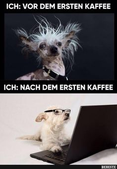 Zuerst Kaffee - My best shares Memes Humor, Animals And Pets, Funny Animals, Cool Pictures, Funny Pictures, Facebook Humor, I Love Coffee, Picture Video, Haha