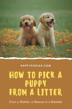 What an exciting time! You have decided to get a puppy. Now you just need to pick one. At first they may all look and act alike. But don't be fooled. Each puppy will have their own personality and traits. It is important to pick a puppy that fits your lifestyle. Whether you are looking to get a puppy from a rescue, a shelter or a breeder, the process of picking a puppy is the same. You need to evaluate each puppy. Join us as we show you how. (#Puppy, #newpuppy, #pickapuppy, #howtopickapuppy) Animal Quotes, Dog Quotes, Best Puppies, Best Dogs, Big Dog Little Dog, Puppy Facts, Pets For Sale, Dog Mom Gifts, Getting A Puppy