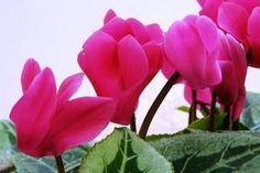 Filléres szuper trükk, hogy szebben virágozzanak a szobanövényeid! - Tudasfaja.com