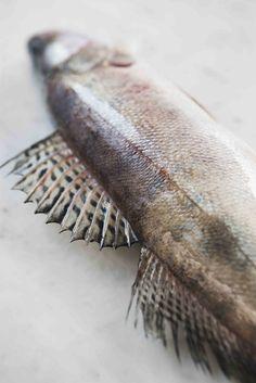 Texture : Fish / Poisson