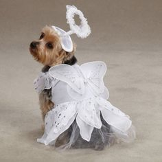 $19.49-$20.99 Your Pup Will Look Heaven-Sent! This white angel costume includes a halo headpiece and features silver metallic accents and shimmering wings. Velcro closures at the neck and belly for an easy, comfy fit. Perfect match for our Devil Dog costumes! (Sold Separatly).