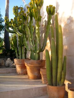 Ibiza  ☮ www.purehouseibiza.com loves Cactus ☮