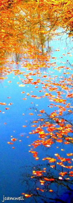 Autumn leaves, Erie Canal ~ Upstate N.Y.