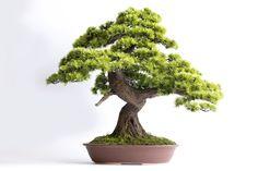 Drzewko wykonane na indywidualne zamówienie Bonsai, Garden Design, Pine, Herbs, Tattoos, Plants, Pine Tree, Tatuajes, Tattoo