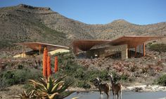 Gallery of Karoo Wilderness Center / Field Architecture - 7