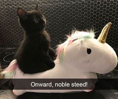 30+ Hilarious Cat Snapchats That Are Im-Paw-Sible Not To Laugh At (New Pics) #dogsfunnyvideos