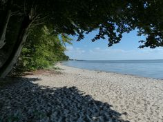Kamminke Strand am Stettiner Haff westlich - Usedom - Wikipedia Criminal Law, Marine Corps, Strand, Colonial, The Past, Beach, Water, Outdoor, Gripe Water