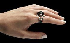 Ring bernese Mountain dog