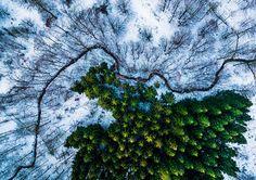 丹麥 Kalbyris 森林