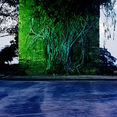 Gameleira, 2012 - da Série Rota Raiz Impressão por jato de tinta de pigmentos minerais sobre papel revestido de baryta 110 x 110 cm