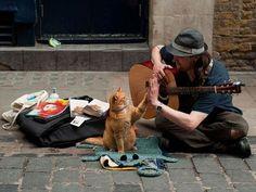 「猫がいて幸せを感じるのは…こんな時!」と言い切れる写真21枚 : らばQ