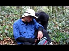Our five hour hike through the mountains of the Bwindi Impenetrable Forest in Uganda was rewarded with an amazing and unforgettable hour of interaction with . Gorilla Trekking, Mountain Gorilla, Roosters, Uganda, Blessings, Blessed, Peace, Amazing, Youtube