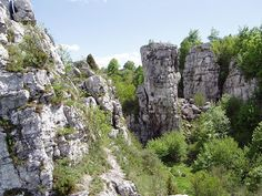 Image result for Dreveník