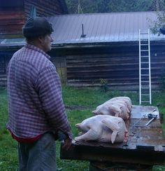 HOW TO BUTCHER A TURKEY ***VERY GRAFFIC PICTURES*** Please be ware before re-pinning or viewing!!!!