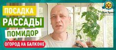 Пересадка рассады томатов в открытый грунт на балкон Привет друзья, с вами вновь на связи Буянов Олег. Сегодня мы начинаем рассказывать о пересадке рассады. Недавно я купил немножечко рассады, это было 3 куста огурцов, и 2 куста помидор. Дело в том, что я высаживал на рассаду — 3 семечки. Но из них проросло только одно небольшое растение. #огороднабалконе #зеленьдома #мойогород #выращиваниезелени #огороднаподоконнике #живоепитание #сыроед #веганство #веган #здоровье #буяновсыроед #сыроедение…