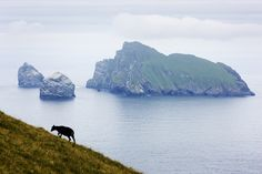 Stac an Armin, Stac Lee, and Boreray, as seen from Hirta, part of the St Kilda archipelago
