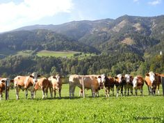 Located in Palfau in the Steirische Eisenwurzen Nature Reserve, this hotel is mi from the Hochkar ski area. Nature Reserve, Austria, Skiing, Animals, Ski, Animales, Animaux, Animal, Animais