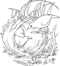 click to see printable version of satin bowerbird coloring page - Armadillo Coloring Pages Print
