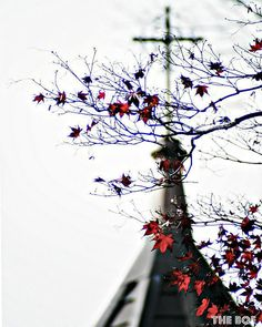A Cross Behind the Red Leaves 16x20 Photography Print by thebqe