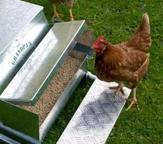 treadle chicken feeder (opens when chicken steps on platform, then closes to protect food from predators), damn mice