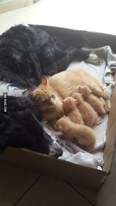Diego (dog), Nala (kitty) and her babies