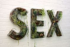 "Doug Aitken, ""Sex"", 2010, living word-clear PETG, white acrylic, moss, driftwood,various plants, 30 x 68 inches."