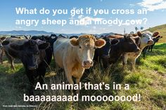 If you like jokes and animals, you've come to the right place! Enjoy these 18 funny animal puns we've collected just for you. Farm Jokes, Farm Humor, Funny Farm, Funny Cows, Jokes And Riddles, Corny Jokes, Animal Puns, Animal Humor, Funny Animal