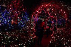 Van Dusen Gardens, Festival of Lights Pix 'n Prose