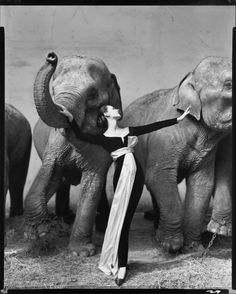 Dovima with Elephants - Richard Avedon.