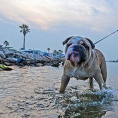 Dog Days of Summer on Galveston Island, via Flickr.