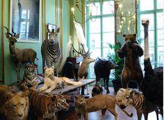 Deyrolle Taxidermy Shop   46 Rue du Bac, St Germain