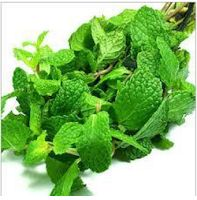 Ripples's Commodity Blog: Mentha oil futures little changed as demand picks ...