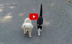 Cat Helps Blind Dog Home After a Walk - Love Meow