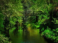 Water Of Leith / May