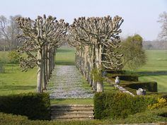 The Lime walk in spring at Mottisfont Abbey Garden, England. photo by Adam Hodge